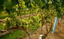 http://www.santacruzfarmersmarket.org/wp-content/uploads/2012/06/1142.jpg