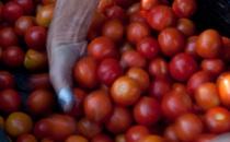 http://www.santacruzfarmersmarket.org/wp-content/uploads/2012/06/MolinoListing210x130.jpg