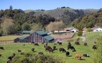 TomKat-Ranch2