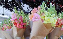 http://www.santacruzfarmersmarket.org/wp-content/uploads/2016/02/Stone-Meal-Thumbnail_Website.jpg